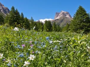 Il Monte Thabor nella valle della Clarée