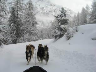 Cani di slitta a Névache
